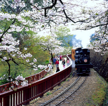 Alishan High mountain train, Taiwan
